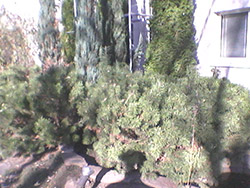 Пример съемки камерой Samsung Metro 312. Рис. 3