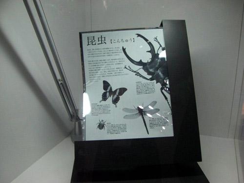 Sony показала 13-дюймовую гибкую электронную бумагу