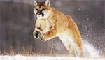 Apple показала OS X 10.8 Mountain Lion